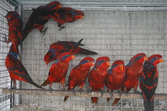 Creekwoodbirds com | exotic birds breeders in india, bird breeders