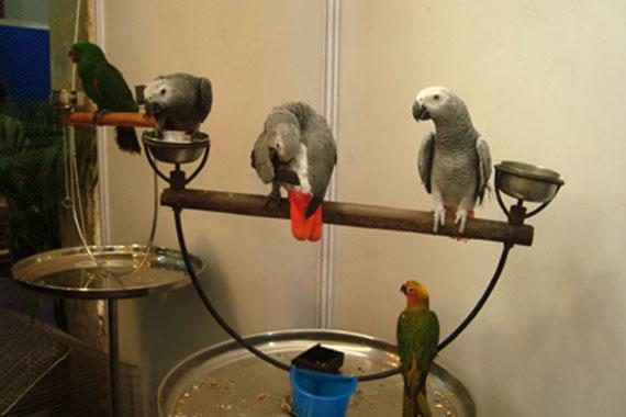 Creekwoodbirds com   exotic birds breeders in india, bird